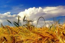 potpore-u-poljoprivredi