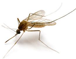 Suzbijanje komaraca – adulticidni i larvicidni tretman