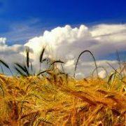 Grad Glina raspisao je natječaj o subvencijama u 2012