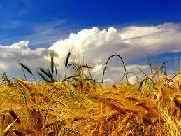 Potpisani ugovori o sufinanciranju tehničke dokumentacije za legalizaciju objekata poljoprivredne