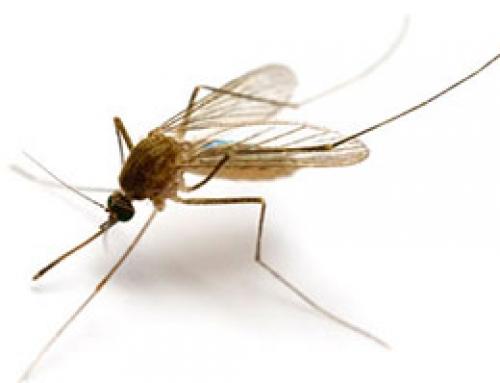 Odgoda suzbijanja komaraca