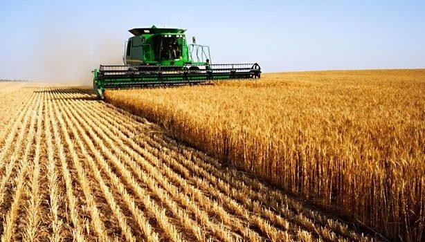 DOPUNA UPUTE za provedbu Naputka ministra poljoprivrede za postupanje u primjeni odredbe članka 51. stavka 3. Zakona o poljoprivrednom zemljištu